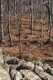 Moraines and leafless beech forest Royalty Free Stock Images