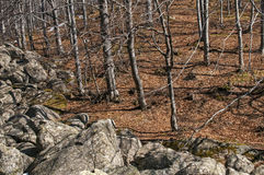 Moraines and leafless beech forest Royalty Free Stock Photos