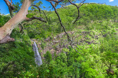 Moran's falls lookout in Lamington national park Stock Photos