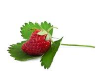 Morango apetitosa Imagem de Stock