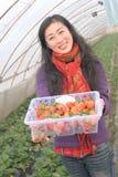 Morango da colheita Imagens de Stock