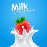 Morango do leite da etiqueta Ilustração do vetor Imagens de Stock Royalty Free