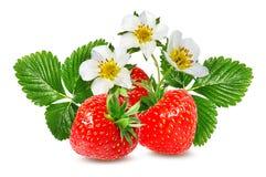 Morango e flor da morango isolada no branco Imagem de Stock Royalty Free