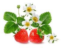 Morango e flor da morango isolada no branco Imagens de Stock