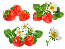Morango e flor da morango isolada no branco Fotos de Stock