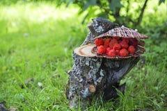 Morango fresca em uma cesta no cânhamo Fotografia de Stock