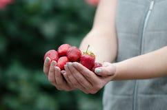A morango frutifica nas mãos do ` um s da mulher Fotografia de Stock