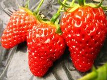 Morango grande vermelha fresca no campo fotos de stock royalty free