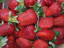 Morango madura fresca Fotografia de Stock