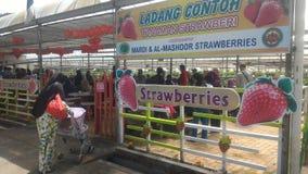 Morango no agro parque de tecnologia em MARDI Cameron Highlands Malaysia imagens de stock