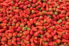Morango orgânica fresca no fundo Muita morango foto de stock royalty free