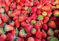 Morango riped fresca, fundo da exploração agrícola do alimento Foto de Stock Royalty Free