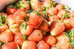 A morango seja fresca, comer dos olhares Imagem de Stock