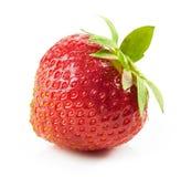 Morango vermelha fresca Imagem de Stock