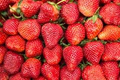 Morango vermelha fresca Imagens de Stock