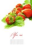 A morango vermelha frutifica com as folhas verdes isoladas sobre Foto de Stock