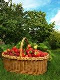 Morangos Foto de Stock Royalty Free
