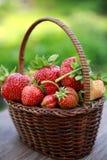 Morangos da cesta no jardim do verão Foto de Stock Royalty Free