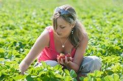 Morangos da colheita da menina Imagem de Stock