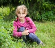 Morangos da colheita da menina Foto de Stock