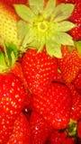 Morangos doces e vermelhas imagens de stock