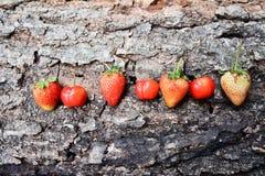 Morangos e cerejas Foto de Stock