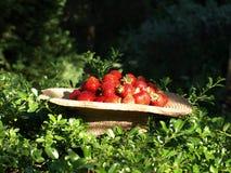 morangos em um fundo da vegetação Fotografia de Stock Royalty Free