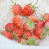 Morangos escolhidas frescas Fotografia de Stock Royalty Free