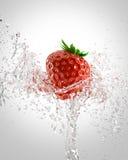 Morangos frescas Imagem de Stock