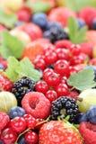 Morangos frescas da coleção das bagas dos frutos de baga, mirtilos Imagens de Stock Royalty Free
