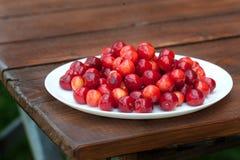 Morangos frescas vermelhas na natureza imagens de stock royalty free