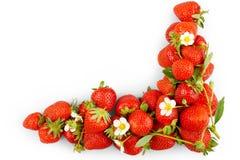 Morangos frescas, vermelhas no fundo branco, isolado Fotos de Stock Royalty Free