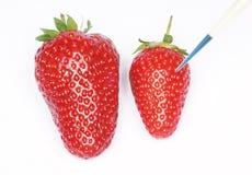 Morangos Genetically de alteração fotos de stock royalty free