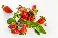 Morangos maduras frescas com folhas e flor Fotografia de Stock