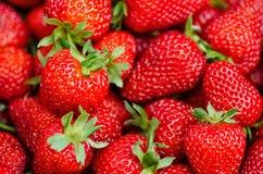 Morangos perfeitas frescas, maduras, doces como um fundo Foto de Stock Royalty Free