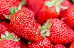 Morangos perfeitas frescas, maduras, doces como um fundo Fotos de Stock Royalty Free