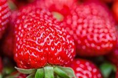 Morangos perfeitas frescas, maduras, doces como um fundo Imagens de Stock