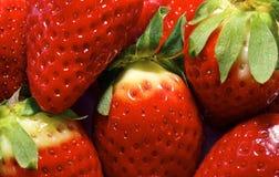 Morangos perfeitas maduras frescas Imagens de Stock Royalty Free