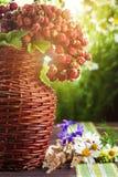 Morangos selvagens e wildflowers no sol Imagem de Stock Royalty Free