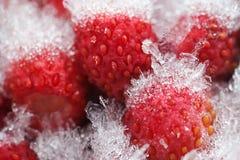Morangos silvestres congelados no refrigerador Bagas vermelhas doces pequenas do fruto com dos cristais do gelo e da neve semente Fotos de Stock