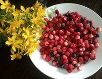 Morangos silvestres e flores amarelas Fotografia de Stock