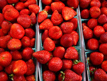 Morangos vermelhas brilhantes Foto de Stock