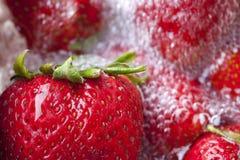 Morangos vermelhas frescas Foto de Stock Royalty Free