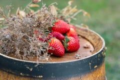 Morangos vermelhas, grama seca em um tambor de vinho de madeira no jardim na primavera imagens de stock