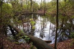Morasko陨石自然保护 免版税库存照片