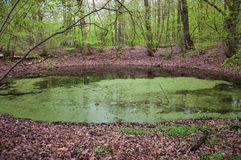 The Morasko meteorite nature reserve. Is located in Morasko, on the northern edge of the city of Poznań, Poland. It contains seven meteor craters. The stock photography
