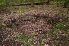 The Morasko meteorite nature reserve Stock Photos