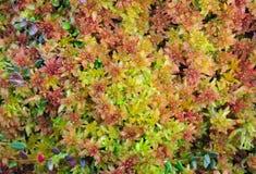 Morass flora. Royalty Free Stock Photography