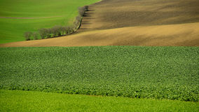 Moravia rolling hills with wheat filds Royalty Free Stock Photo