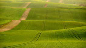 Moravia rolling hills with wheat filds Royalty Free Stock Photos